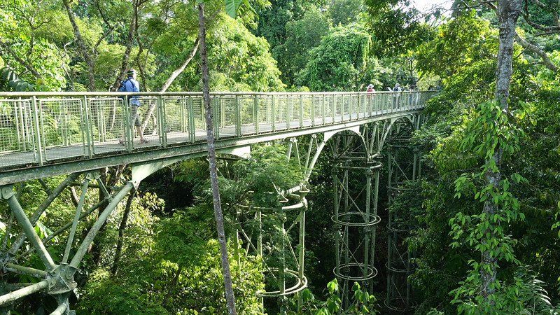 A small part of the famous Sepilok Canopy Walkway, photographed by participant Steve Wilson.