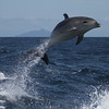 How much fun would it be to be a Bottlenose Dolphin?! (Photo by guide Chris Benesh)
