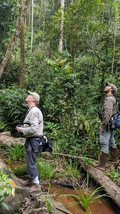 Next up are images from our Vietnam tour. In this image from participant Robert Pacheco, guides Dave Stejskal (l.) and Doug Gochfeld are busy scanning the canopy.