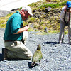 Participants Tim and Chris get up close and personal with the Keas at Homer Tunnel. This native New Zealand parrot is rumored to be perhaps the smartest of all birds. (Photo by participant Linda Nuttall)