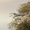 This isn't a rarity, of course, but the Rio Grande Valley is full of all kinds of great birding and birds, from the very localized to the widespread, like this graceful Great Egret by participant Mahlon Hale.