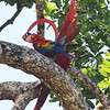 It takes a second to realize what's going on with this preening Scarlet Macaw. Participant Steve Rannels shared this artistic shot.