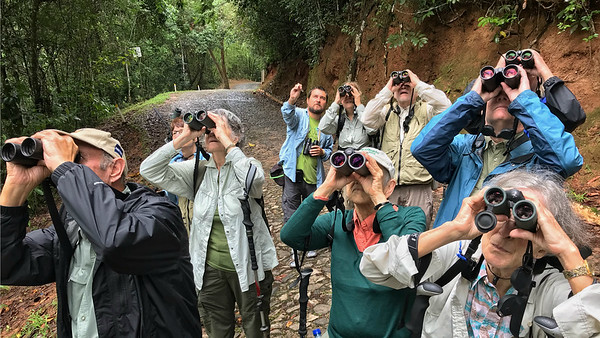 We keep receiving wonderful feedback from all of you who have traveled with new guide Marcelo Barreiros, who has a busy slate of 9 tours in 2019. Here he is pointing out a bird from the back of the group. Photo by guide Bret Whitney.