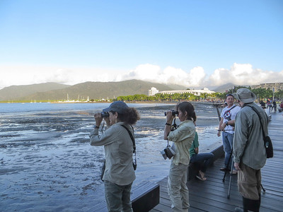 The city of Cairns in northeastern Australia features the Esplanade...and some great shorebirding opportunities right in town! (Photo by participant Conny Palm)