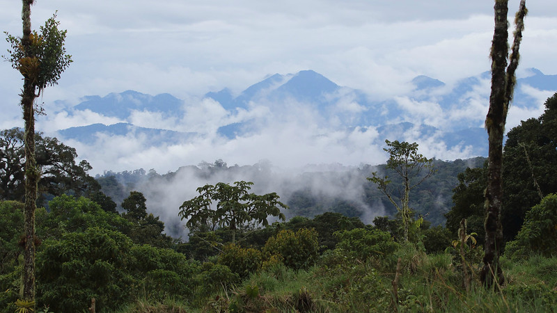 The view from Wildsumaco's porch, photographed by participant Myles McNally.