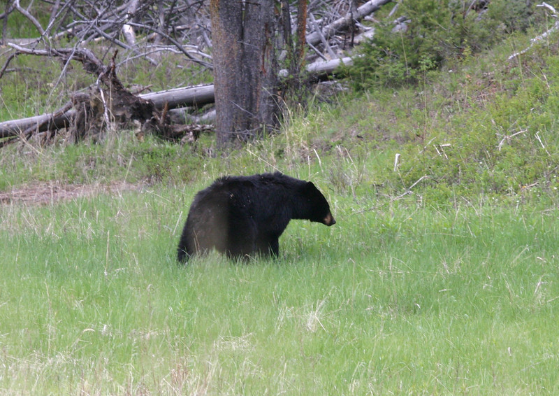 ...to Black Bears to Bison and more. (Photo by participant Chad Huckabee)