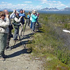 One of our 2013 groups birding along the Denali Highway on a beautiful day. (Photo by participant Bob Polkinghorn)