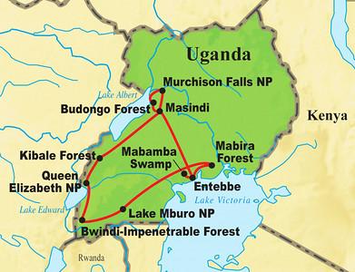 """Next, let's jet over to Africa for a taste of the tropics on our """"Uganda: Shoebill, Rift Endemics & Gorillas"""" tour."""