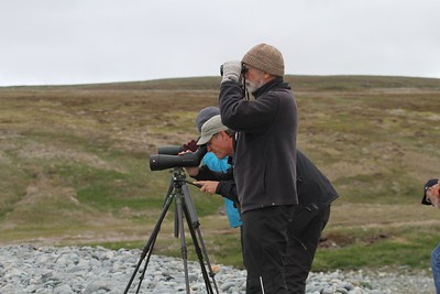 Here, guide Chris Benesh scopes for a vagrant Black-headed Gull with part of our group. (Photo by participant Mary Lou Barritt)