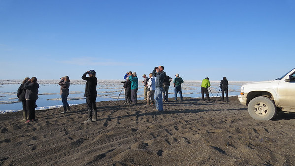 One of our groups scanning the ice for Polar Bears and more at Point Barrow (Photo by participant Neil McDonal)