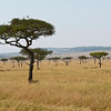 The Masai Mara, a great birding and wildlife destination, is large reserve of acacia savanna in southern Kenya that abuts the Serengeti in neighboring Tanzania. (Photo by participant Steve Madison)