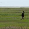 Guide Doug Gochfeld on Nummy Island, photographed by participant Tatiana Neumann.