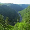 Featured next in this slideshow is our Pennsylvania's Warblers & More tour. This stunning landscape is the Pine Creek Gorge. At almost 50 miles long and more than 1000 feet deep, it is known as the Grand Canyon of Pennsylvania. Photo by guide Micah Riegner.