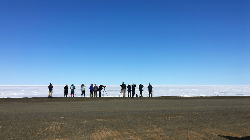 When we got to Utqiagvik (formerly Barrow) this year, we found the Chukchi Sea still solidly frozen. However, you might be surprised how productive seawatching over ice can be. Photo by participant Bonnie Schwartz.