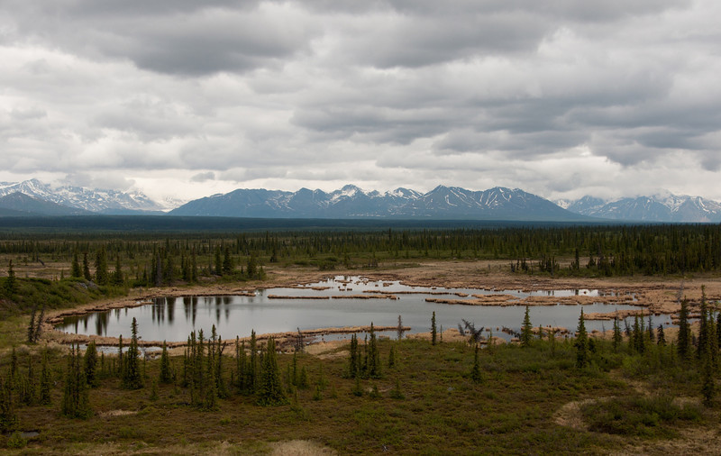Birding along the Denali Highway takes us past some spectacular vistas... (Photo by participant Susie Nishio)