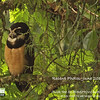 What a lovely what to begin this month's gallery of recent tour images! Spectacled Owl on a day roost on our March 2010 Costa Rica tour, by participant Kevin Heffernan.