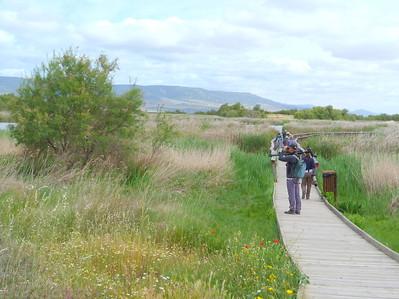 Our group birding the marsh at Parque Nacional Las Tablas de Daimiel (Photo by participant Ed LeGrand)