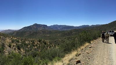 Birding scrub habitats is very productive for many of Arizona's specialties. Photo by participant Laura Tobin.