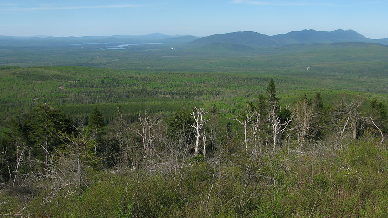The beautiful view from Quill Hill, in Maine's Rangeley region -- lots of great boreal birds here! Photo by guide Eric Hynes.