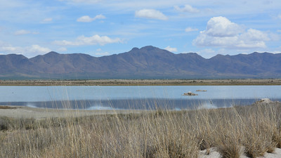 Water in the desert: several wetland stops on our Arizona tours add shorebirds and waterfowl to our birding. Photo by participant Laura Tobin.