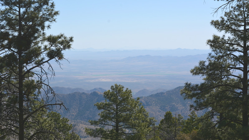 Our birding in Arizona's mountains offers lovely vistas. Photo by participant Laura Tobin.