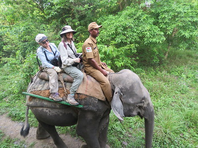 Leapfrogging China and Nepal, our next tour is a new destination: Northeast India. Riding on the back of an Asian Elephant is exhilarating. It is also a safe platform from which to observe...