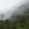 The lovely and rich cloud forest at Cajanuma (Photo by Rose Ann Rowlett)