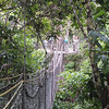 ...check out the Iwokrama Canopy Walkway...