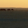 We loved this moody image of camels at the Muntasar oasis by Charlotte.