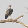 Giant Ibis Feb 15 - 4