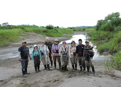 "One of our birding stops at Sacha is on a ""young"" river island, where our group got to see a number of island specialists (amazingly, birds that are not found on the mainland just a short distance away). (Photo by guide Willy Perez)"