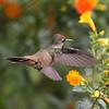 Blossomcrown_lowres_Palo Alto_Santa Marta Escape_WRM_19Jan 2015 1139