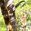 Hmmm... any guesses where the Resplendent Quetzals are nesting this year? (Photo by guide Lena Senko)