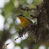 And the birds? Lots of specialties, everything from Tropical Parula, photographed by guide Chris Benesh...