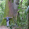 Now that's a tree! Guide Marcelo Padua is dwarfed by an immense Brazil nut trunk. (Photo by participant Glenda Brown)