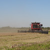 One of the rice combines at work--and flushing up rails galore! (Photo by guide Dan Lane)