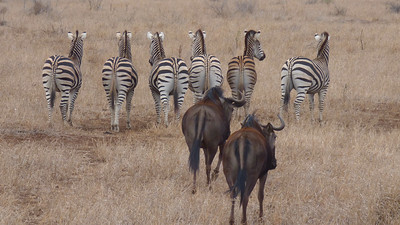 Since the Zebra and Wildebeest seem to be moving on, let's head to the next tour. Photo by participant Cathy Douglas.