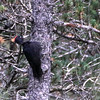 Black Woodpecker was voted the bird of the tour for our second departure. Participant Kevin Watson shared this image.