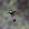 ...a Magnificent Hummingbird by participant Larry Wright...