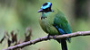 This Andean Motmot was most obliging. (Photo by participant Pete Peterman)