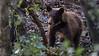 Black Bear azs16b Doug Gochfeld