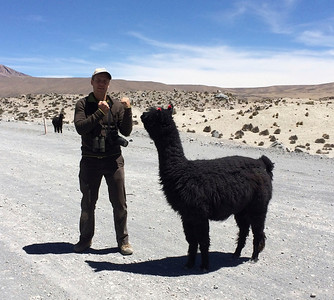 You know you can feel safe when you join guide Peter Burke on tour. He will stand up to anything, even an Alpaca, to ensure the group's well being. En garde!