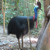 The bizarre and enormous Southern Cassowary is a bird by definition -- but you might not believe it by first impression! Can you guess its alternate name? As this pic suggests, it's Double-wattled! (Photo by participant Merrill Lester)