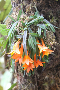This is one of more than 150 species of orchids at a garden we visited. (Photo by guide Phil Gregory)