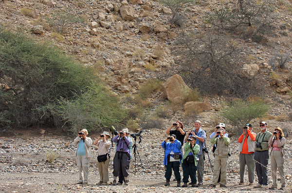 "The gang hot on the trail of an Eastern Orphean Warbler, our last new species found on the Oman & the UAE trip this year. <div id=""caption_tourlink"" align=""right"">[photo © guide George Armistead]</div>"