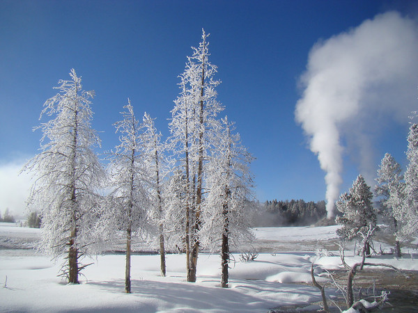 """Frosted trees with Castle Geyser in the background at right -- this is part of the walking loop around Old Faithful.<div id=""""caption_tourlink"""" align=""""right"""">[photo © Jan Pierson]</div>"""