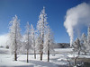 "Frosted trees with Castle Geyser in the background at right -- this is part of the walking loop around Old Faithful.<div id=""caption_tourlink"" align=""right"">[photo © Jan Pierson]</div>"