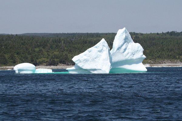 """This iceberg was aground in Witless Bay during our group's visit.  Having traveled south from Greenland in the currents, it was now on its last legs.  The following morning, it had toppled over and was shrinking rapidly.<div id=""""caption_tourlink"""" align=""""right"""">Link to: <a id=""""caption_tourlink"""" href=""""http://www.fieldguides.com/novascotia.htm"""" target=""""_blank"""">NEWFOUNDLAND & NOVA SCOTIA</a><br>[photo © Chris Benesh]</div>"""