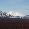 """We should not omit some of the simply awe-inspiring vistas to be had.  Denali is sometimes shrouded in clouds, but guide Chris Benesh revealed this magnificent view for one of our groups.<div id=""""caption_tourlink"""" align=""""right"""">Link to: <a id=""""caption_tourlink"""" href=""""http://www.fieldguides.com/alaska.htm"""" target=""""_blank"""">ALASKA</a><br>[photo © Chris Benesh]</div>"""
