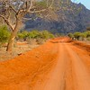 """Let's begin this month's photo selection from recent Field Guides tours with our recent Kenya trip, here on the beautiful red soil of Tsavo East National Park.  Participant Daphne Gemmill returned with a fine collection of images, including those here as well as some additional ones we featured in one of our blog posts (click <a href=""""http://fieldguides.com/news/?p=1418"""" target=""""_blank"""">here</a> to see it in a new browser window). <i>[Note that you can link directly to any tour's web page using the blue links above the photos on this page.]</i><div id=""""caption_tourlink"""" align=""""right""""> [Photo © participant Daphne Gemmill]</div>"""